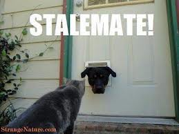 CAT & DOG - STALEMATE